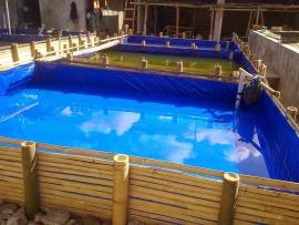 Bisnis Budidaya Ikan Lele di Kolam Terpal