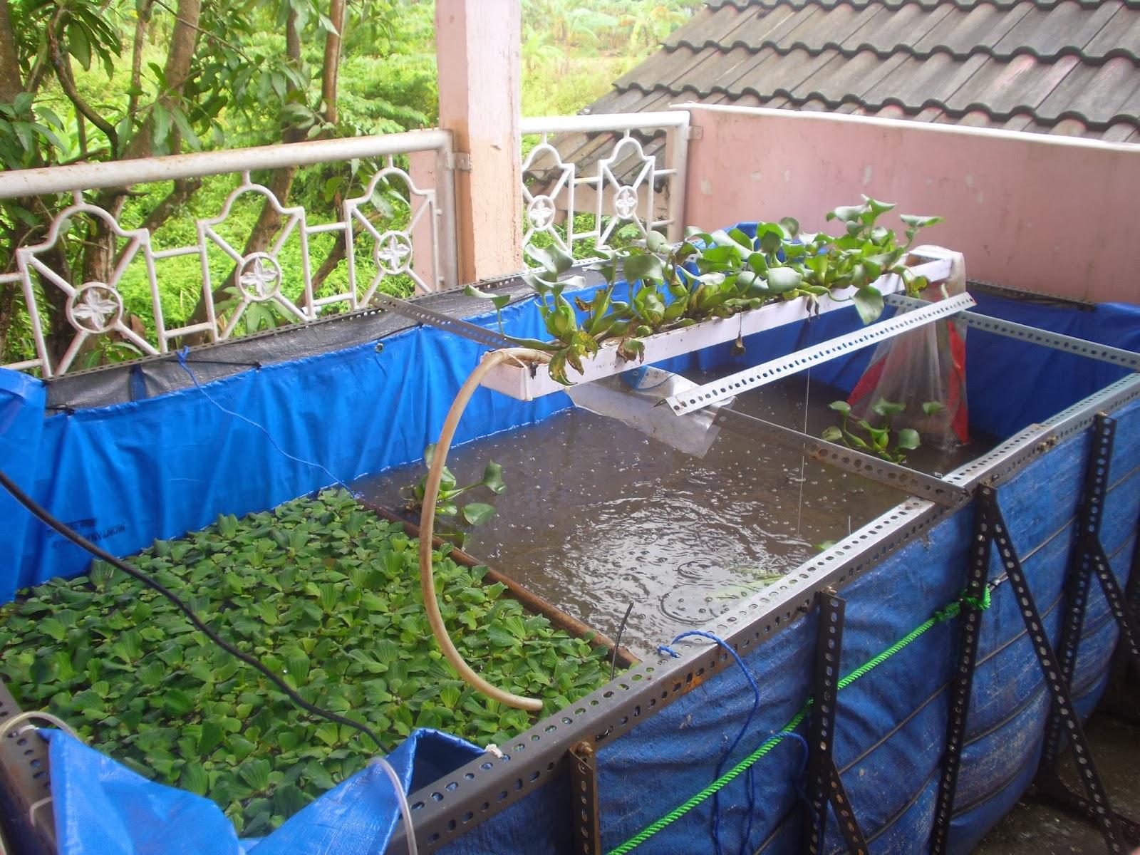 kolam ikan lele dengan terpal