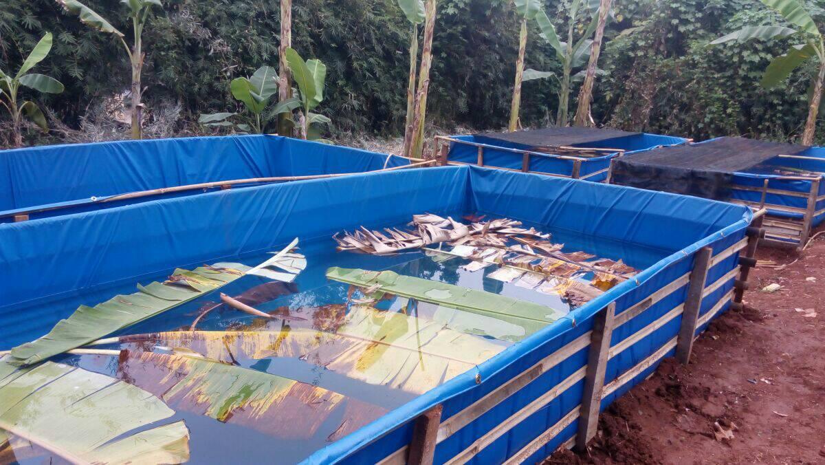 kolam terpal ikan lele