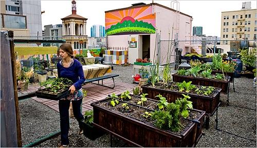 img urban farming bertani di perkotaan
