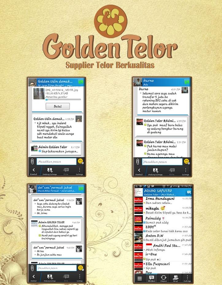 golden telur 16
