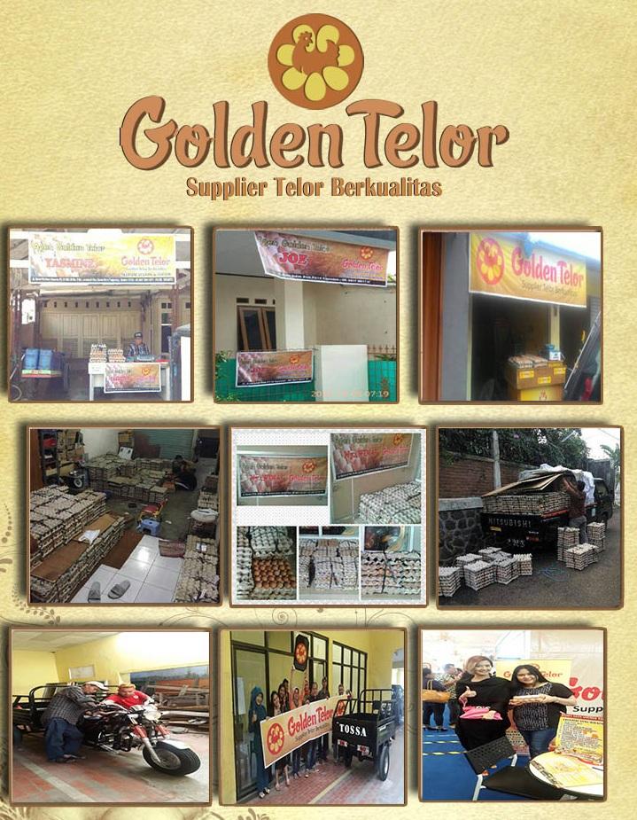 golden telur 27